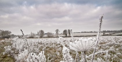 frost10web