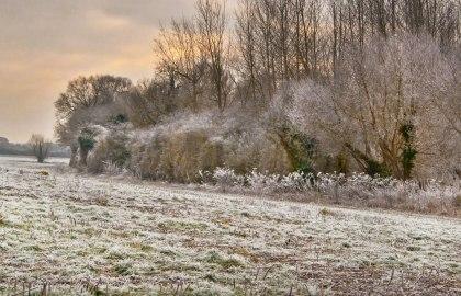 frost8web