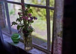 Flowers in the window..